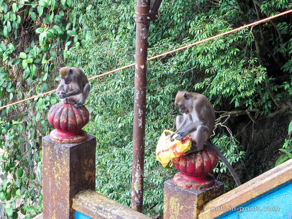 Batu caves and monkeys