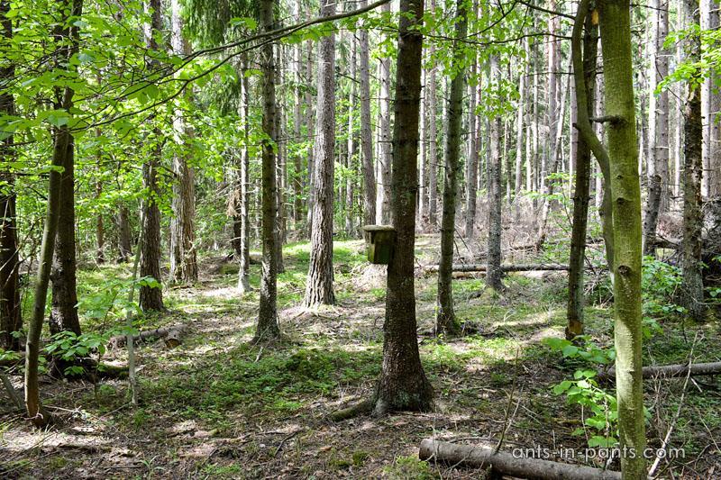 Seili forest