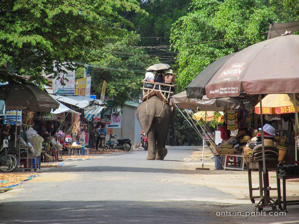 Прокатиться на слонах