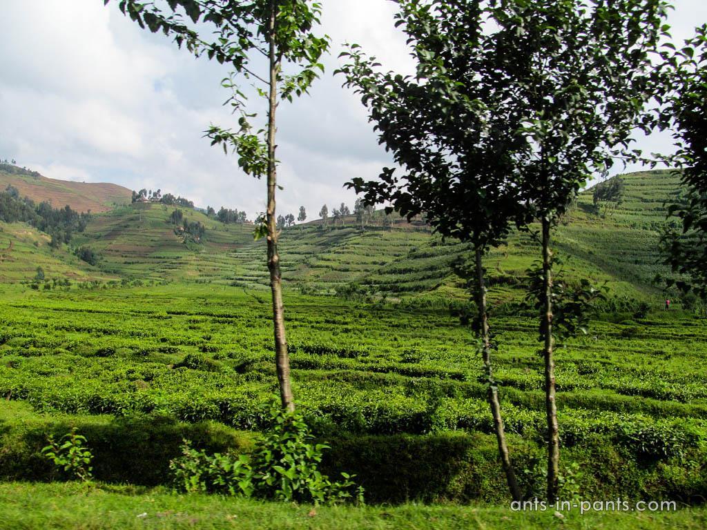 Rwanda-Uganda-Border-3IMG_1812