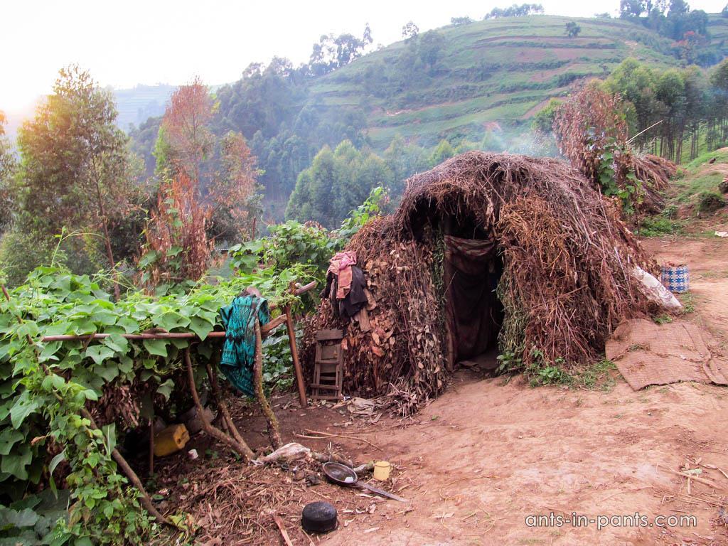 Pygmy hut