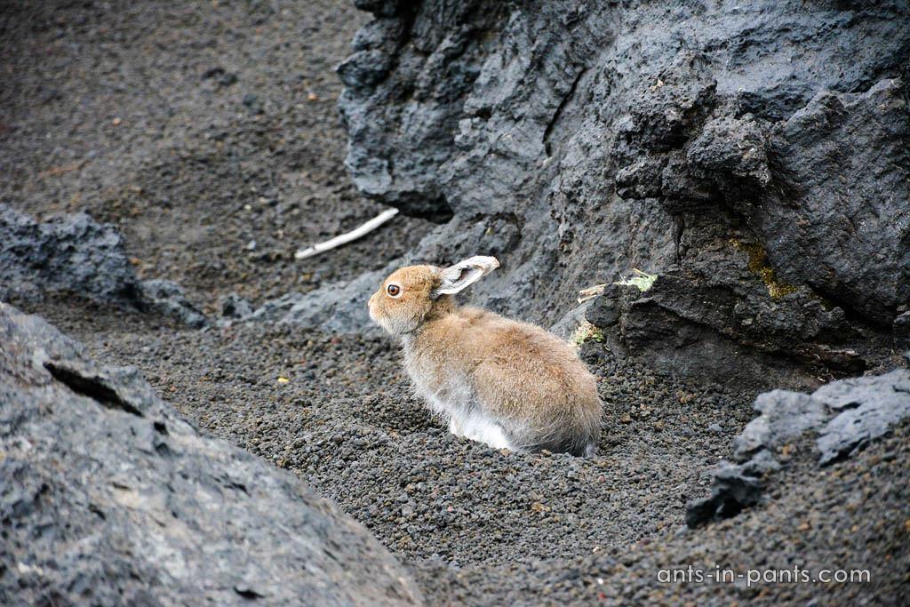 Животный мир на Толбачике