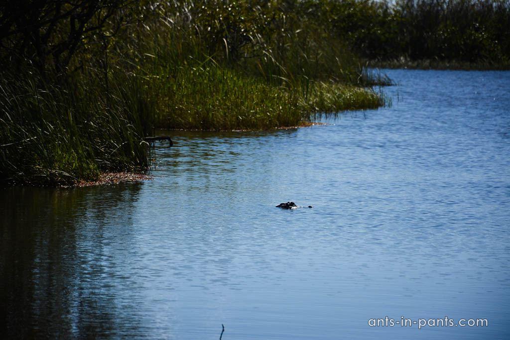 крокодилье сафари