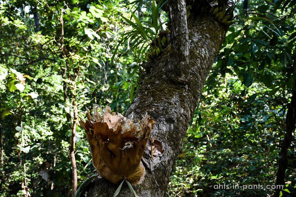 национальный парк Салавин