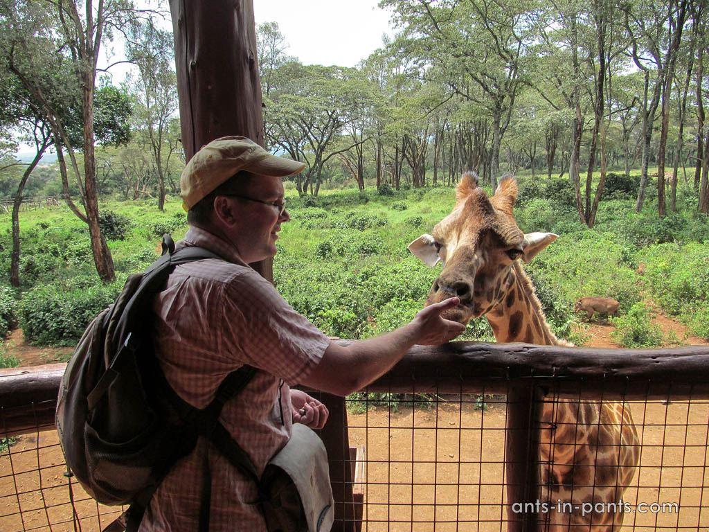 Жирафий питомник