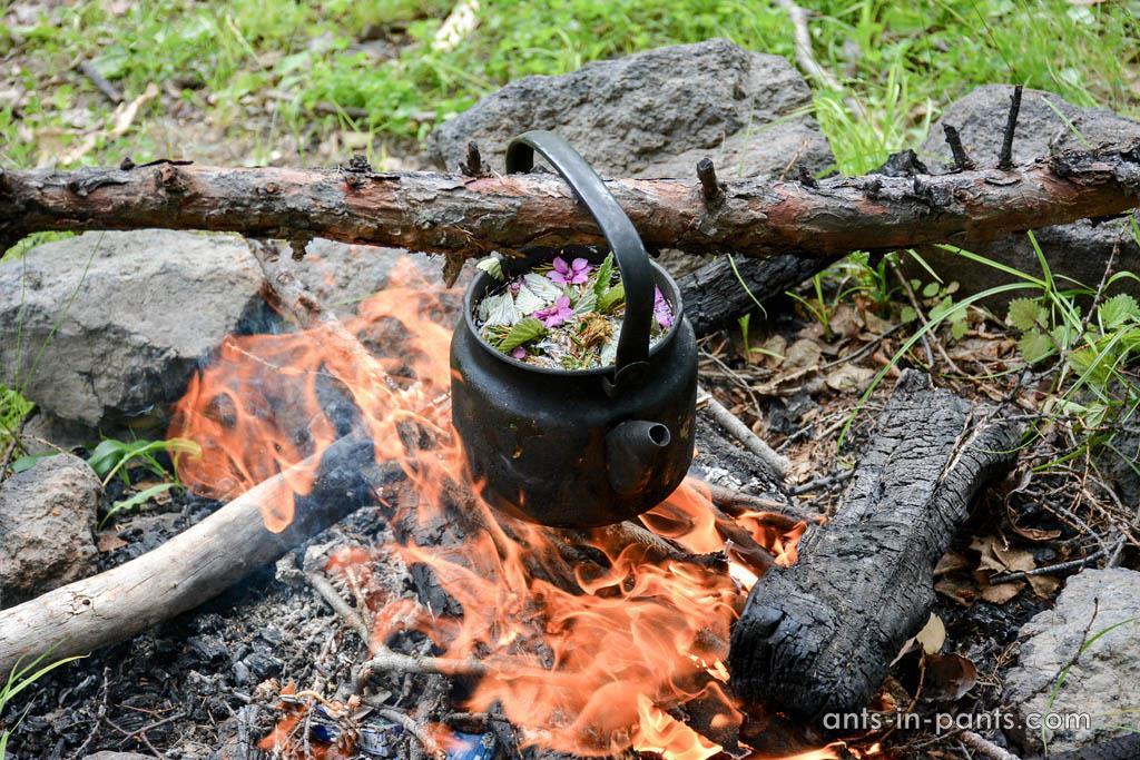 Kamchatka tea