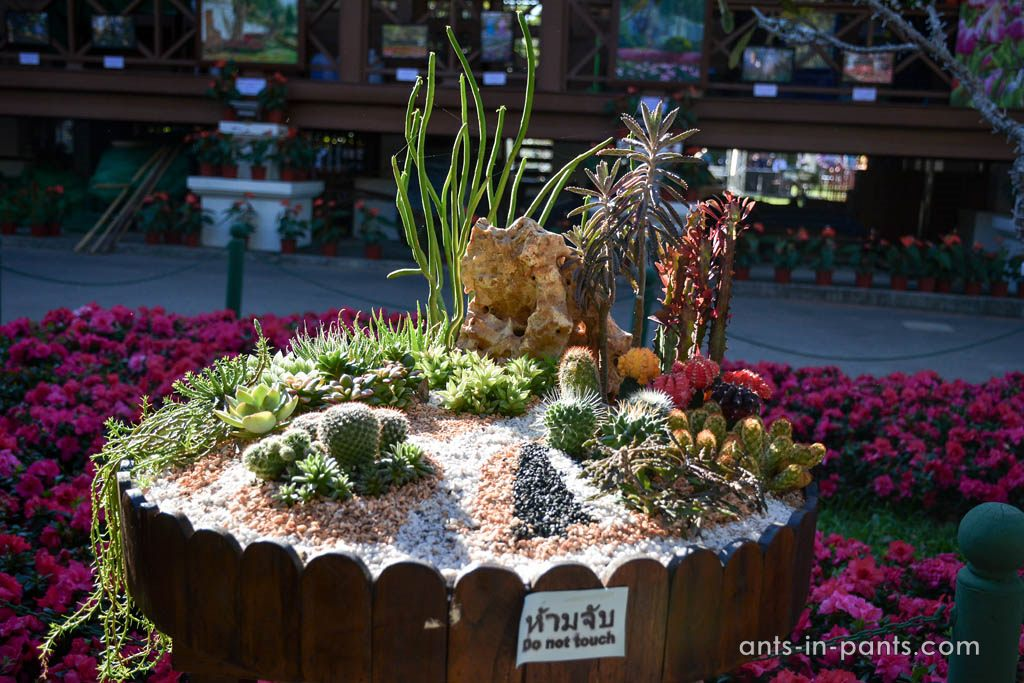 flower exhibition
