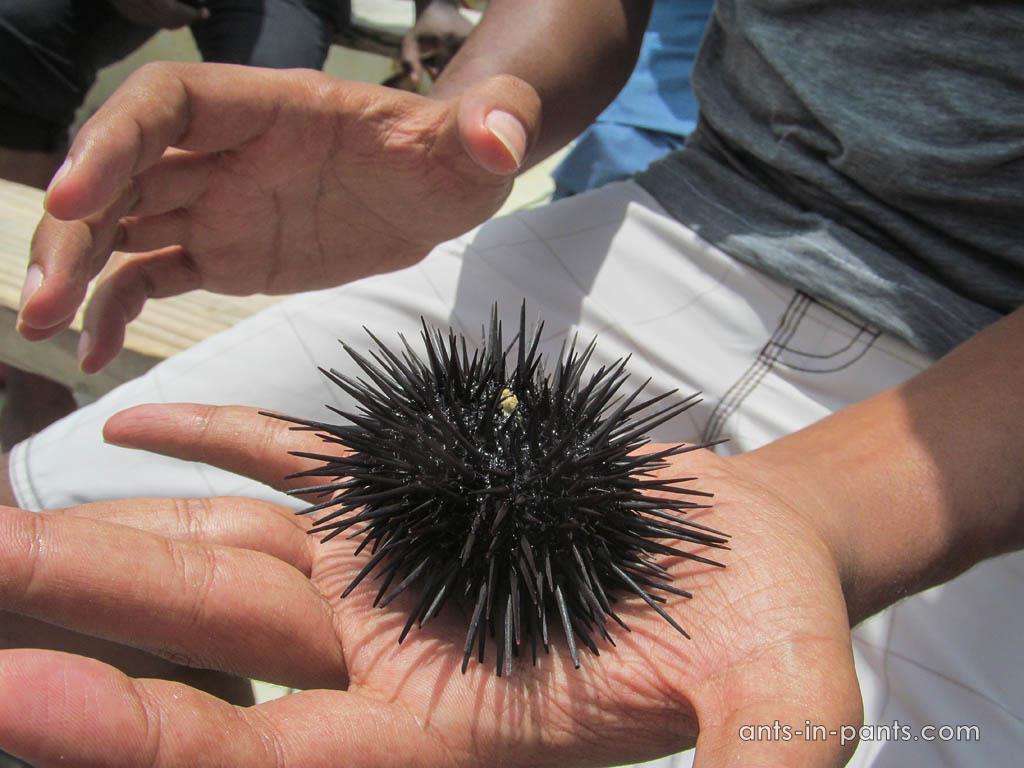 ocean fauna