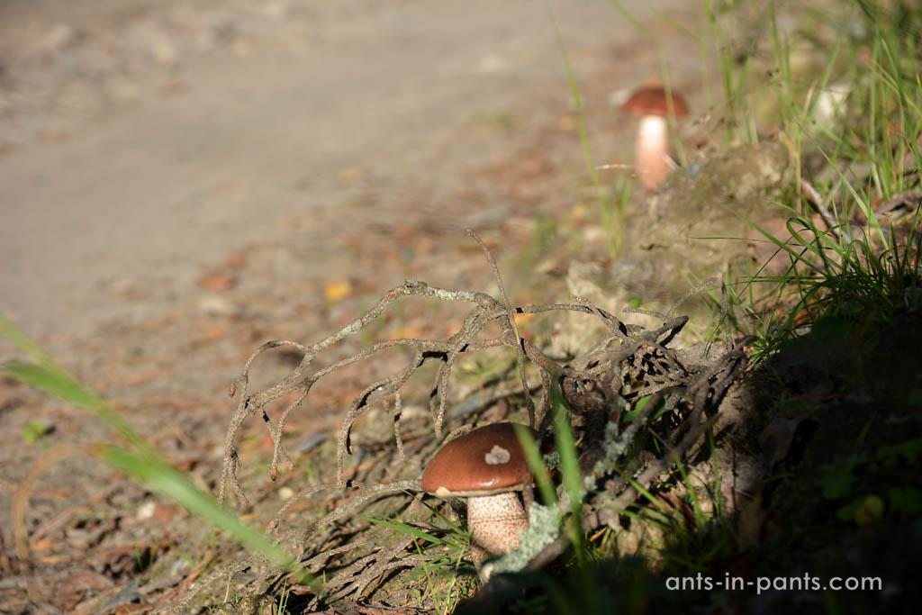 mushrooms in Karelia