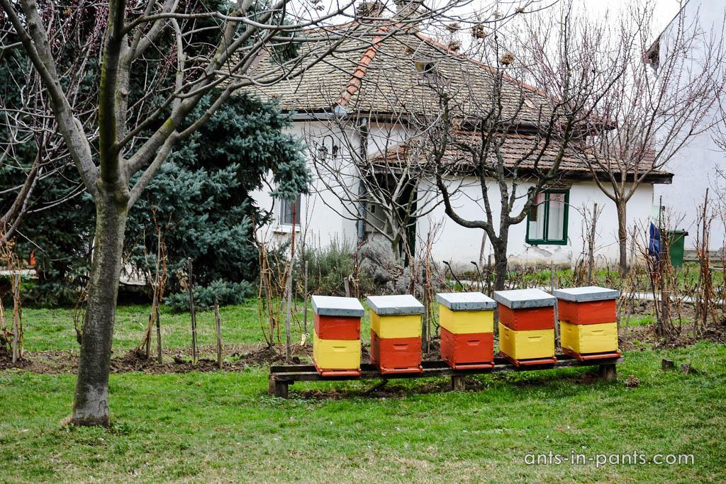 beekeeping museum