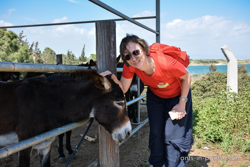 Argonaftis donkey farm