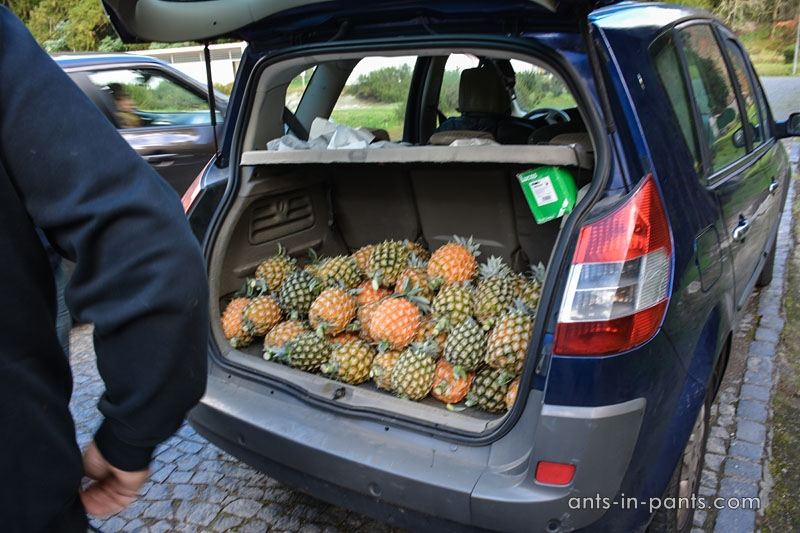 азорские ананасы